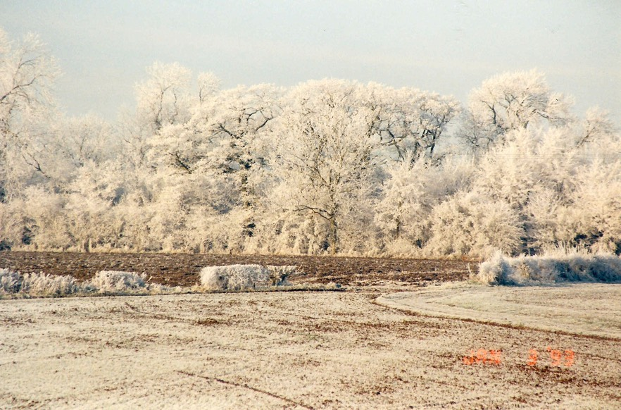 Chicheley frost 1